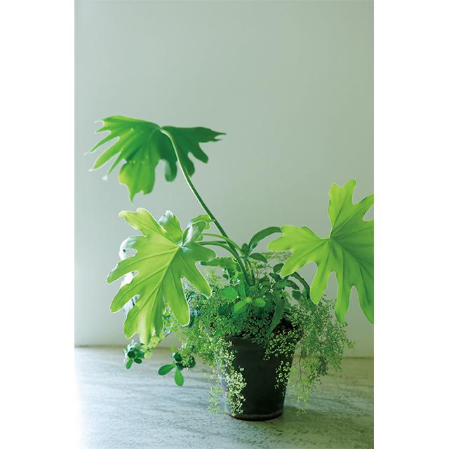 料理家・有元葉子さんの光と風を感じさせる寄せ植え