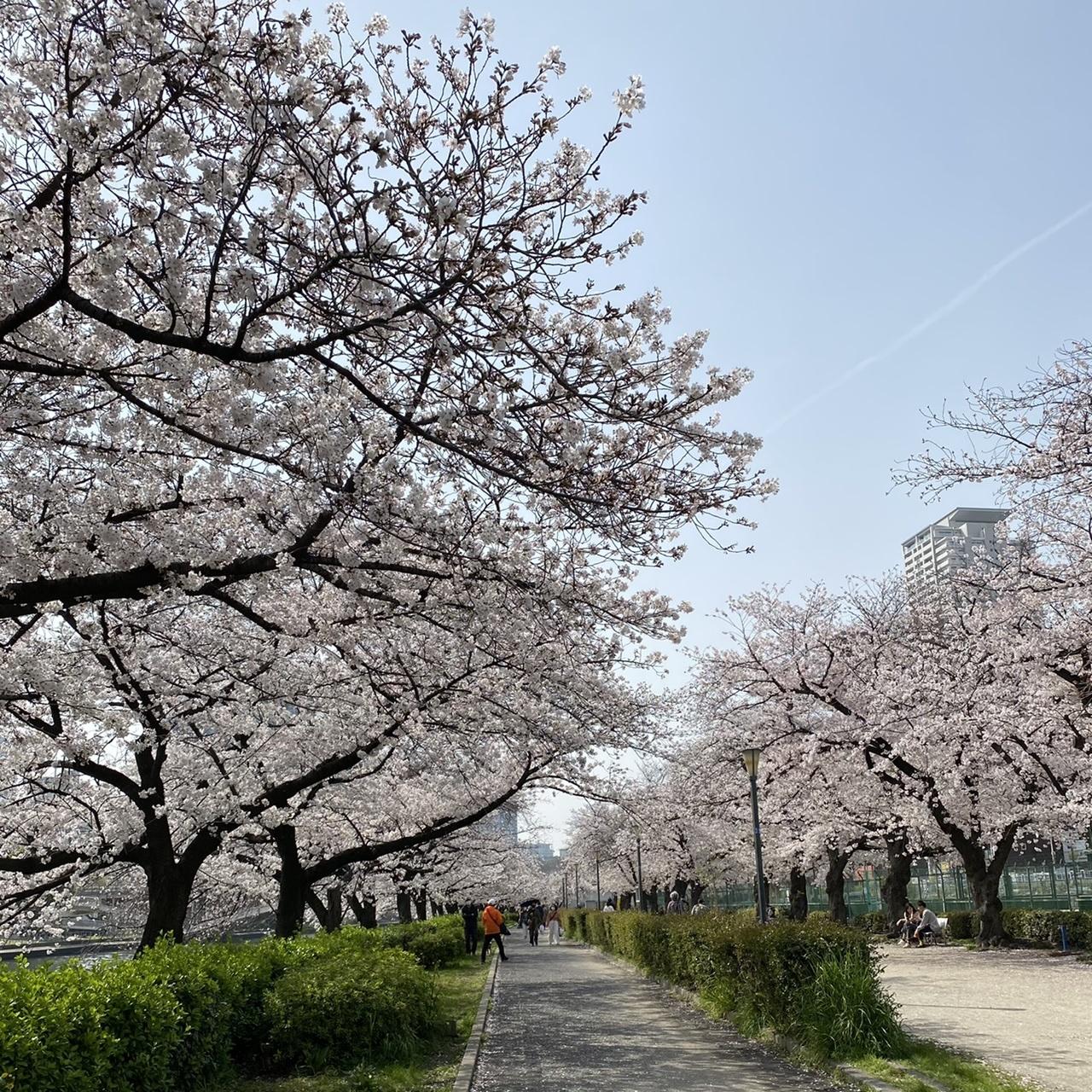 北新地でランチの後は桜の名所までお散歩♫_1_4