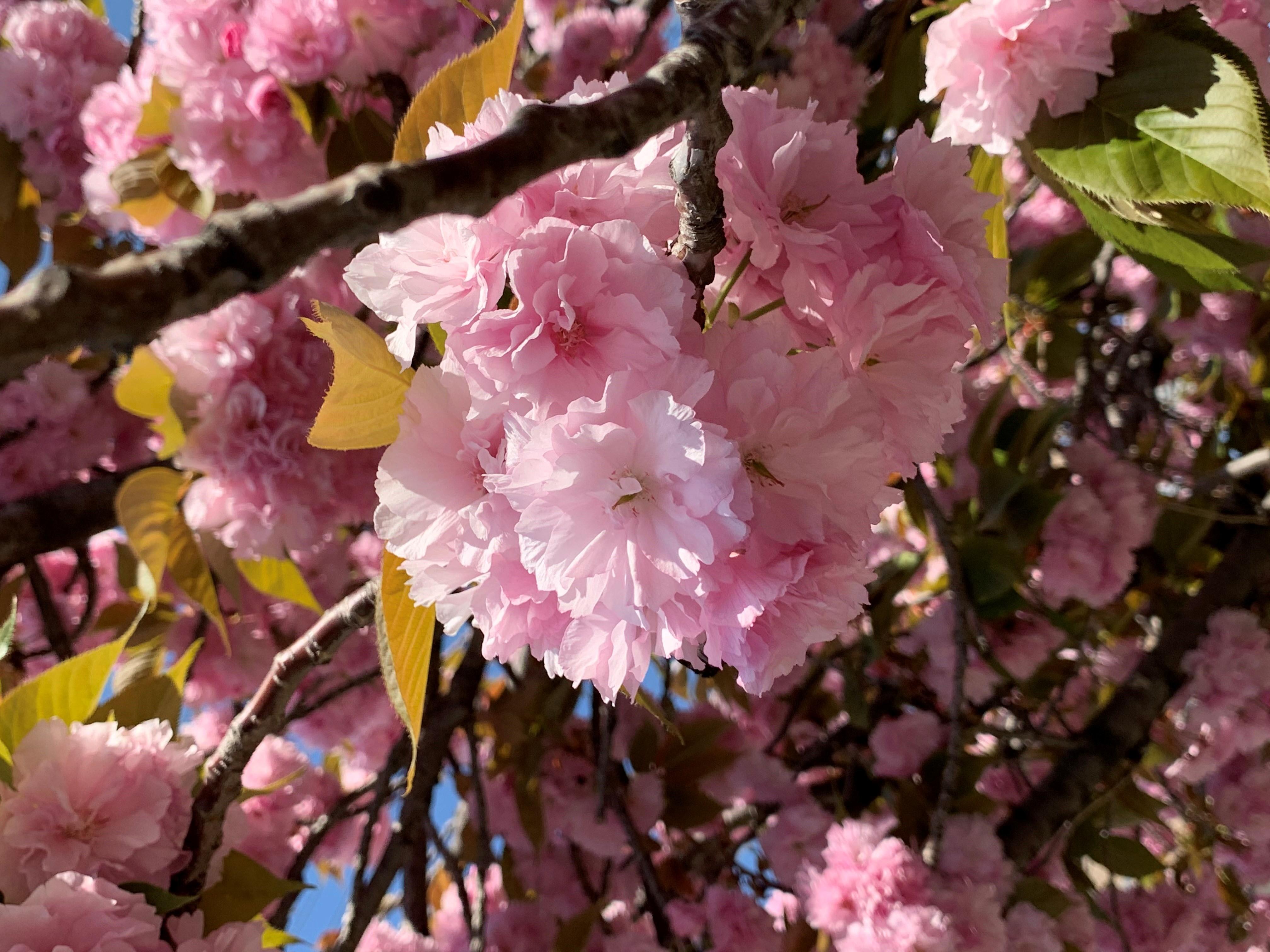 白デニムで出かけよう☆彡 春の散策・・・_1_1-1