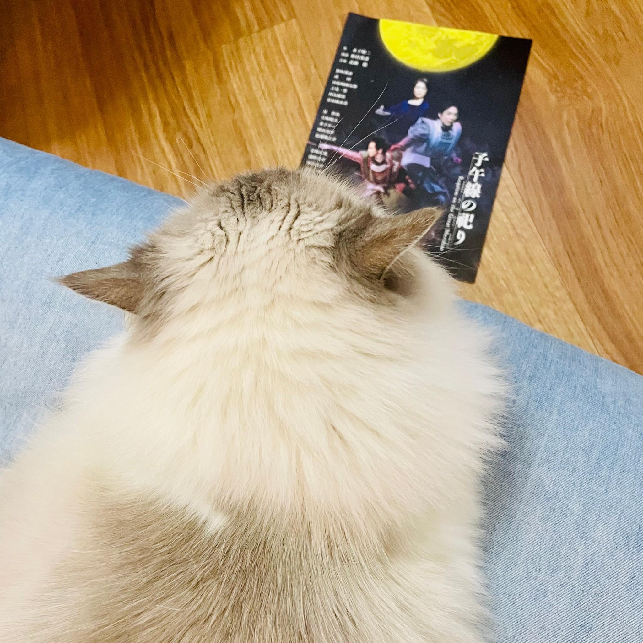 猫(下の子)の後頭部
