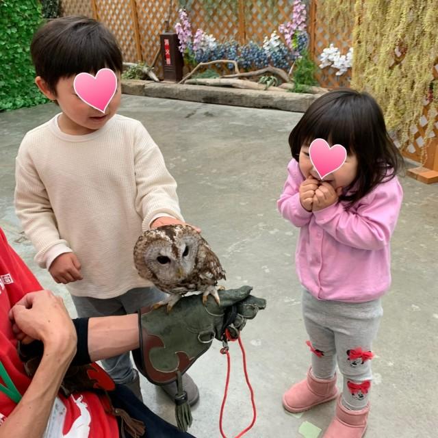 動物とのふれあい旅① ~子供が大喜びの鳥の楽園へ~_1_3-2