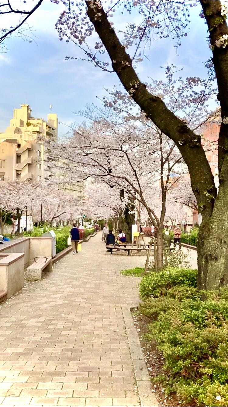【お花見ならココ?】池袋から5分?!ドラマロケ地にもなった桜並木!!_1_2