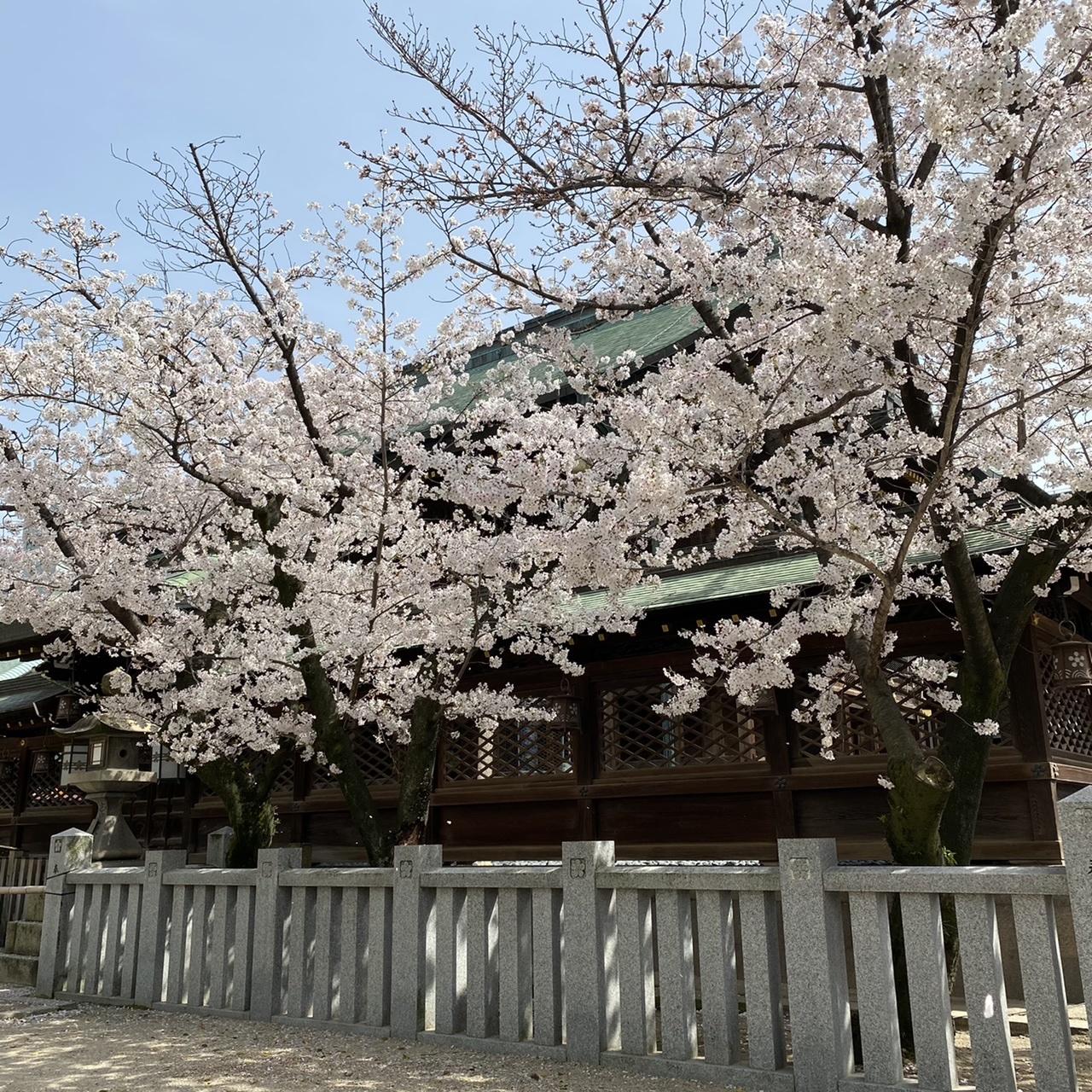 北新地でランチの後は桜の名所までお散歩♫_1_3