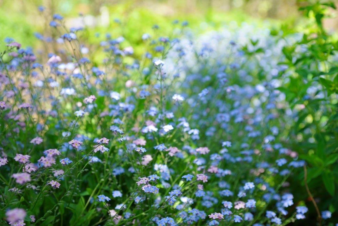お気に入りトップスにGU白デニムで熊山英国庭園へ ~勿忘草~_1_8