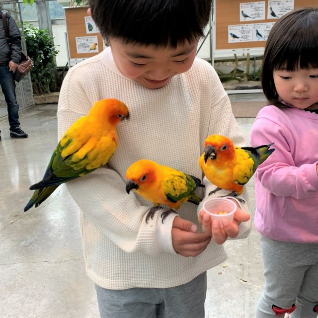 動物とのふれあい旅① ~子供が大喜びの鳥の楽園へ~_1_4-1
