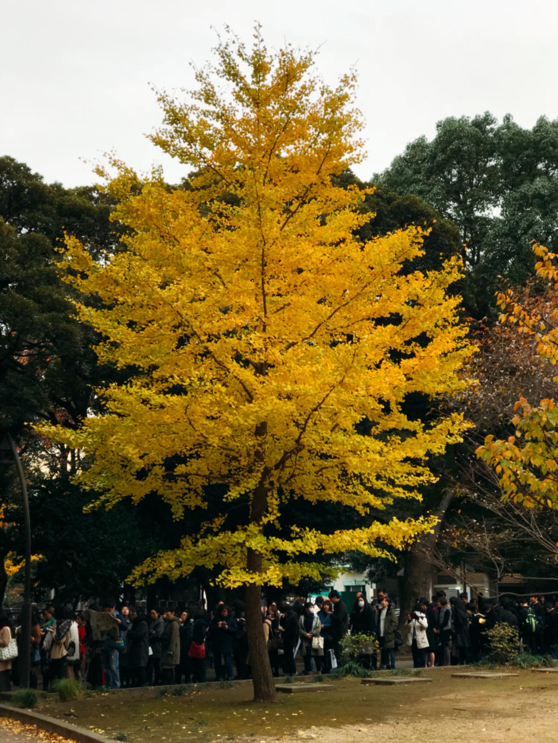 上野でお散歩① 「怖い絵展」「上野動物園」_1_2