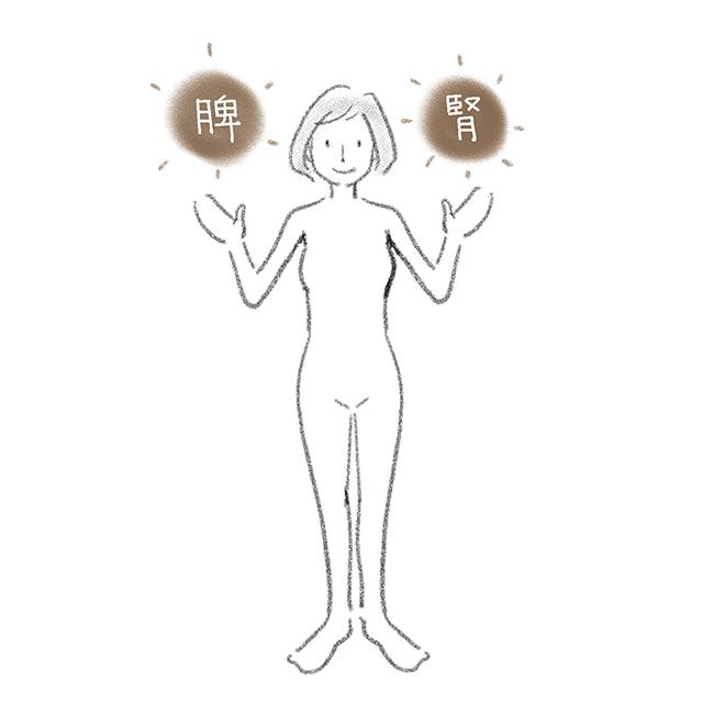 体のエネルギーをつかさどるのは「腎」と「脾」