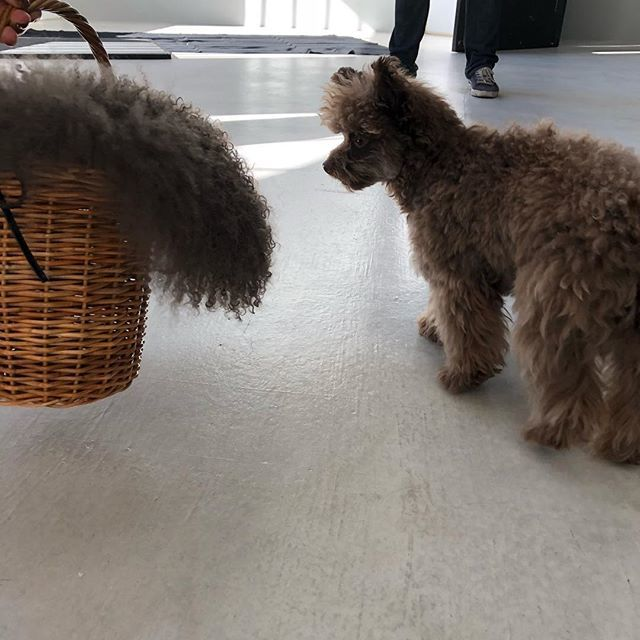 モデル SHIHOちゃんの愛犬チュバ♡なんか似てる……_1_2