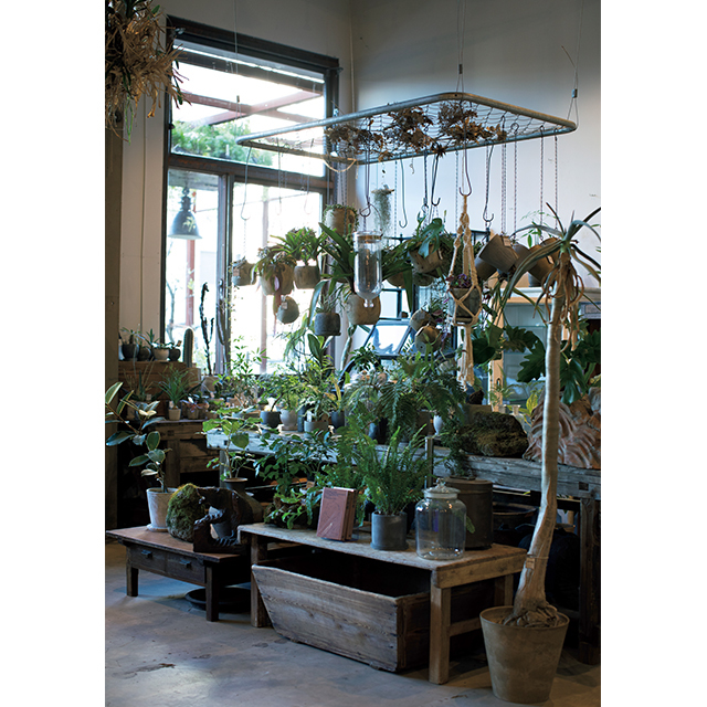 欠けた食器や菓子型などを植木鉢にした観葉植物が人気