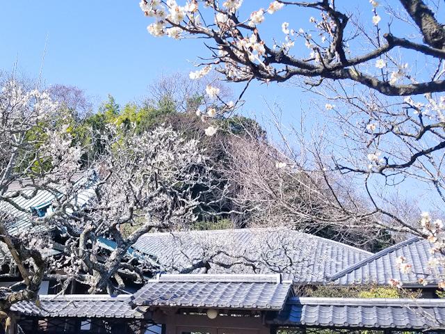 【さかぽんの冒険Vol.5】いざ 北鎌倉から湘南の旅❤️_1_3