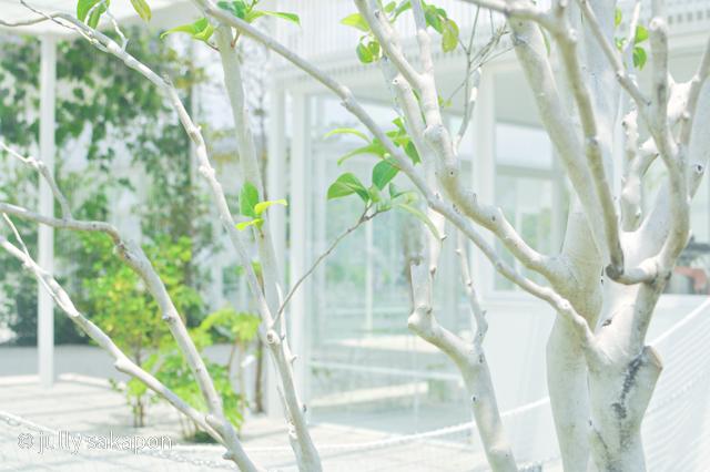 【さかぽんの冒険】初夏のお台場 あじさい散策_1_3
