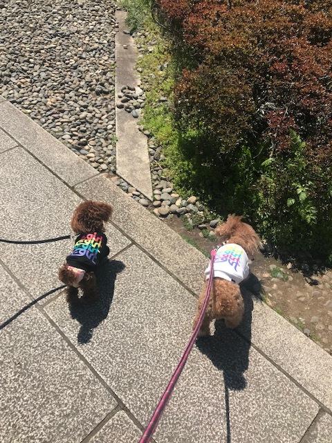 春のお散歩は犬にも優しい成田山へ_1_3-1