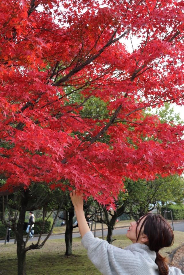 暖冬のため、つい先日行った公園でまだ紅葉が見られました♪