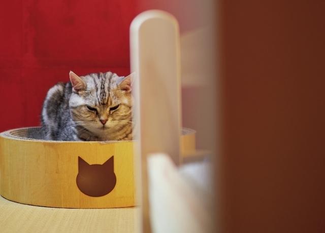 【あの人の溺愛ねこ図鑑 第6回】角田光代さんの愛猫はひそかに甘えん坊なトト_1_3-1