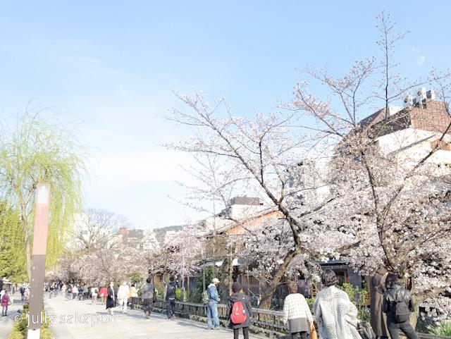 【番外編】古都 京都 鴨川を巡る桜旅 2021.3_1_7