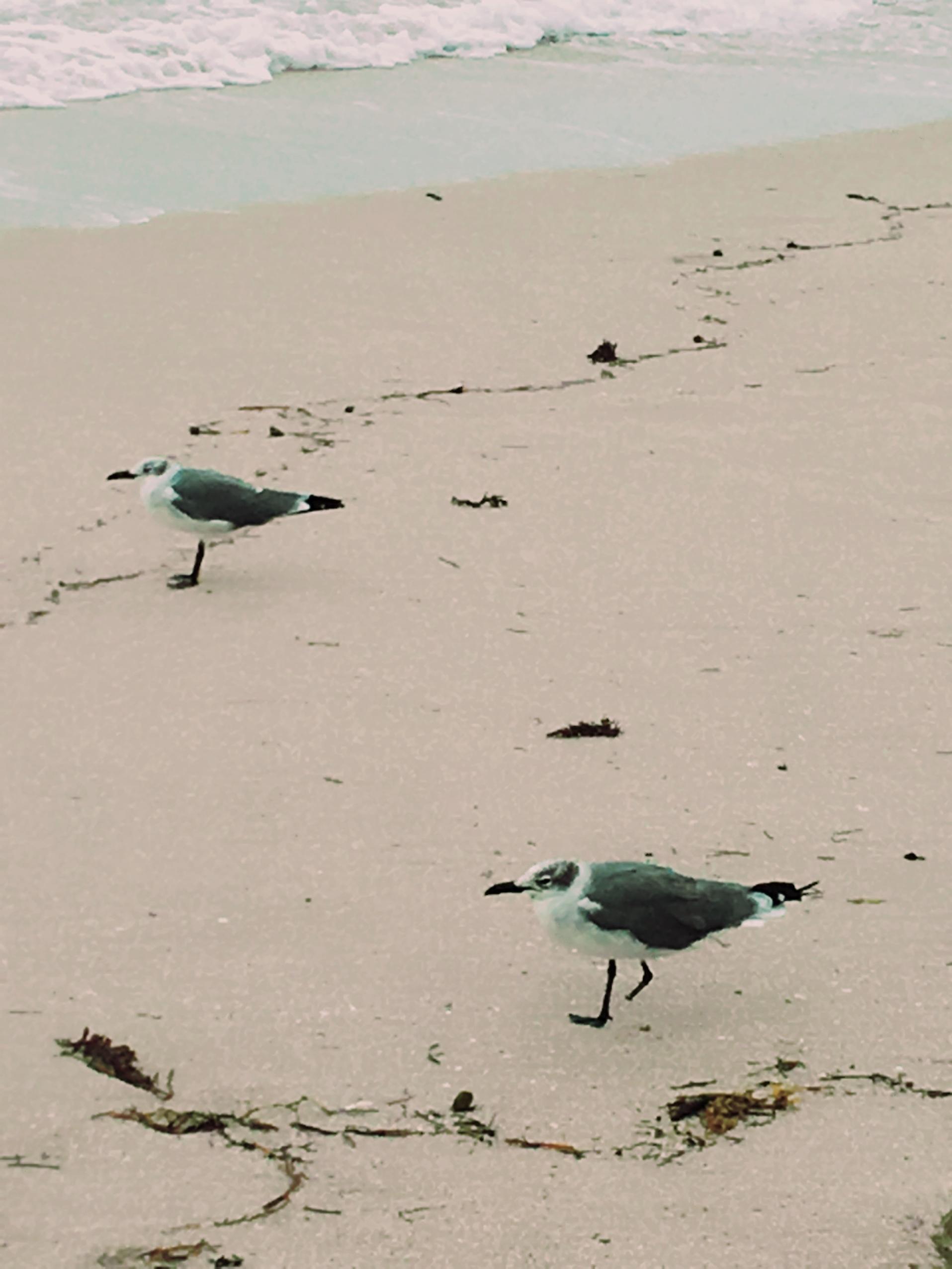 マイアミビーチにて。_1_13