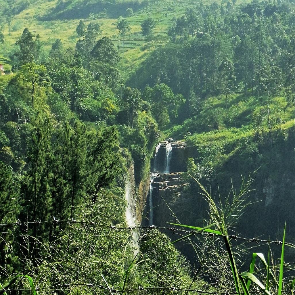 紅茶畑と工場@スリランカ_1_2