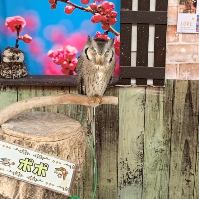 動物とのふれあい旅① ~子供が大喜びの鳥の楽園へ~_1_2-3
