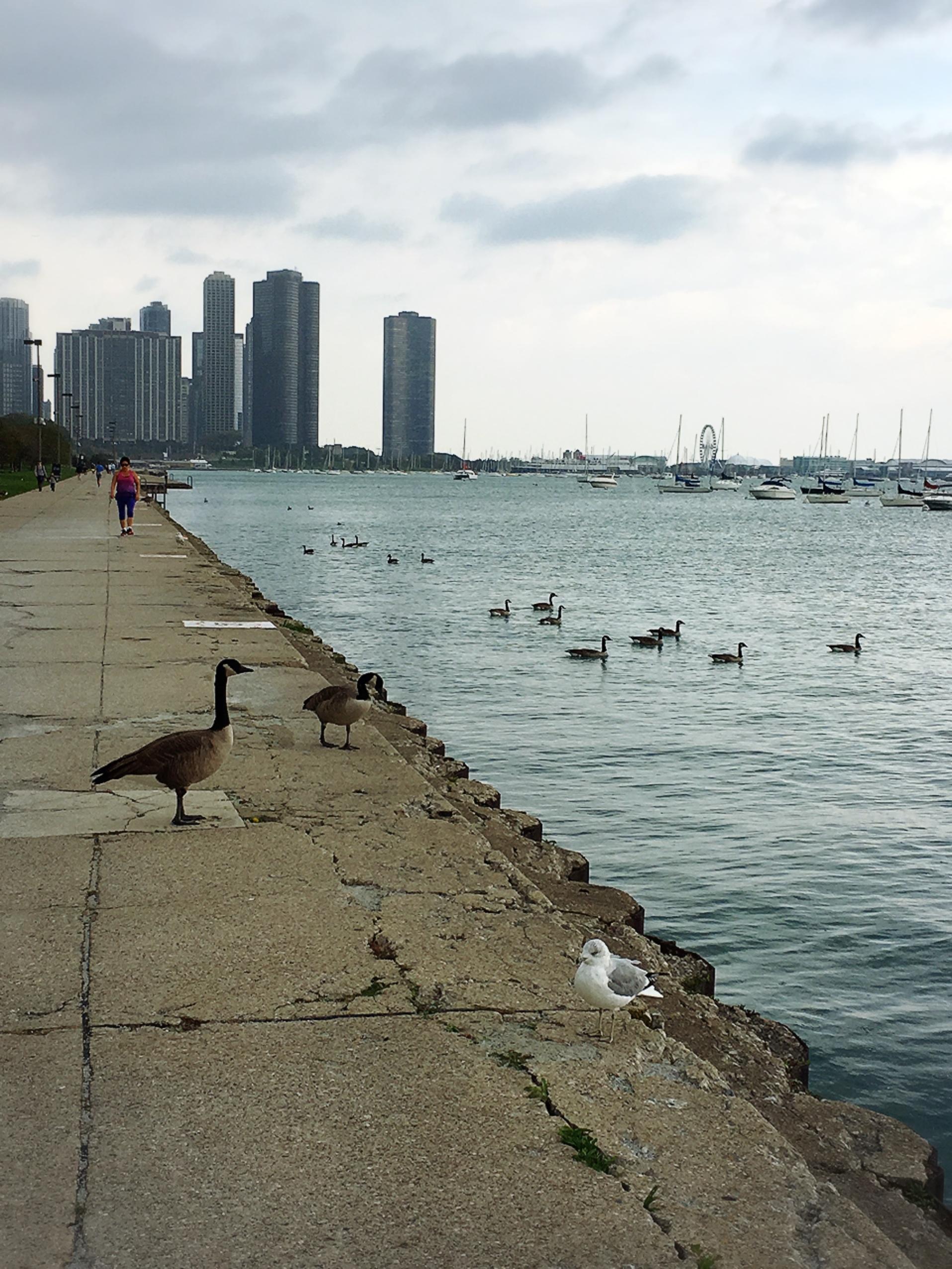 またまた、シカゴにお仕事でした。_1_4