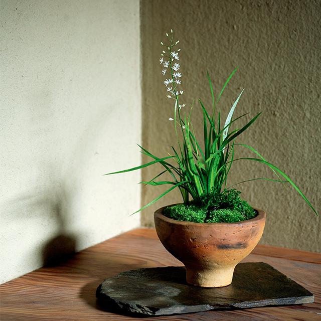誂えの花は自然の景色を切り取ったかのような寄せ植えや盛り花