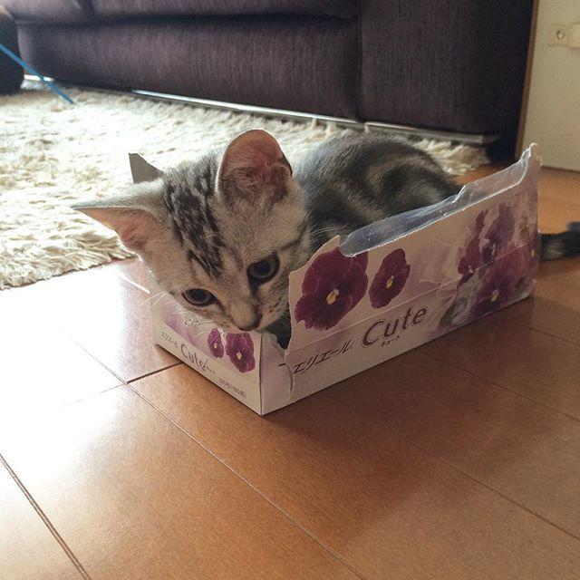 子猫のころから箱がスキ!_1_2