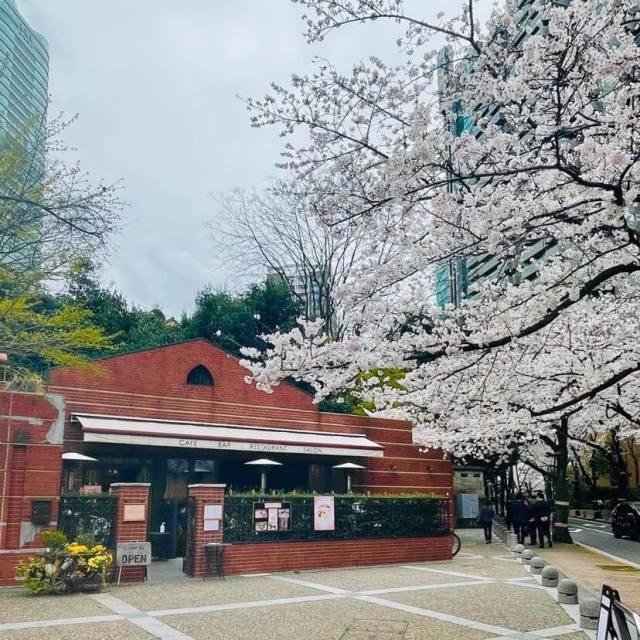 春を感じる白ワンピースでお花見ランチへ_1_5