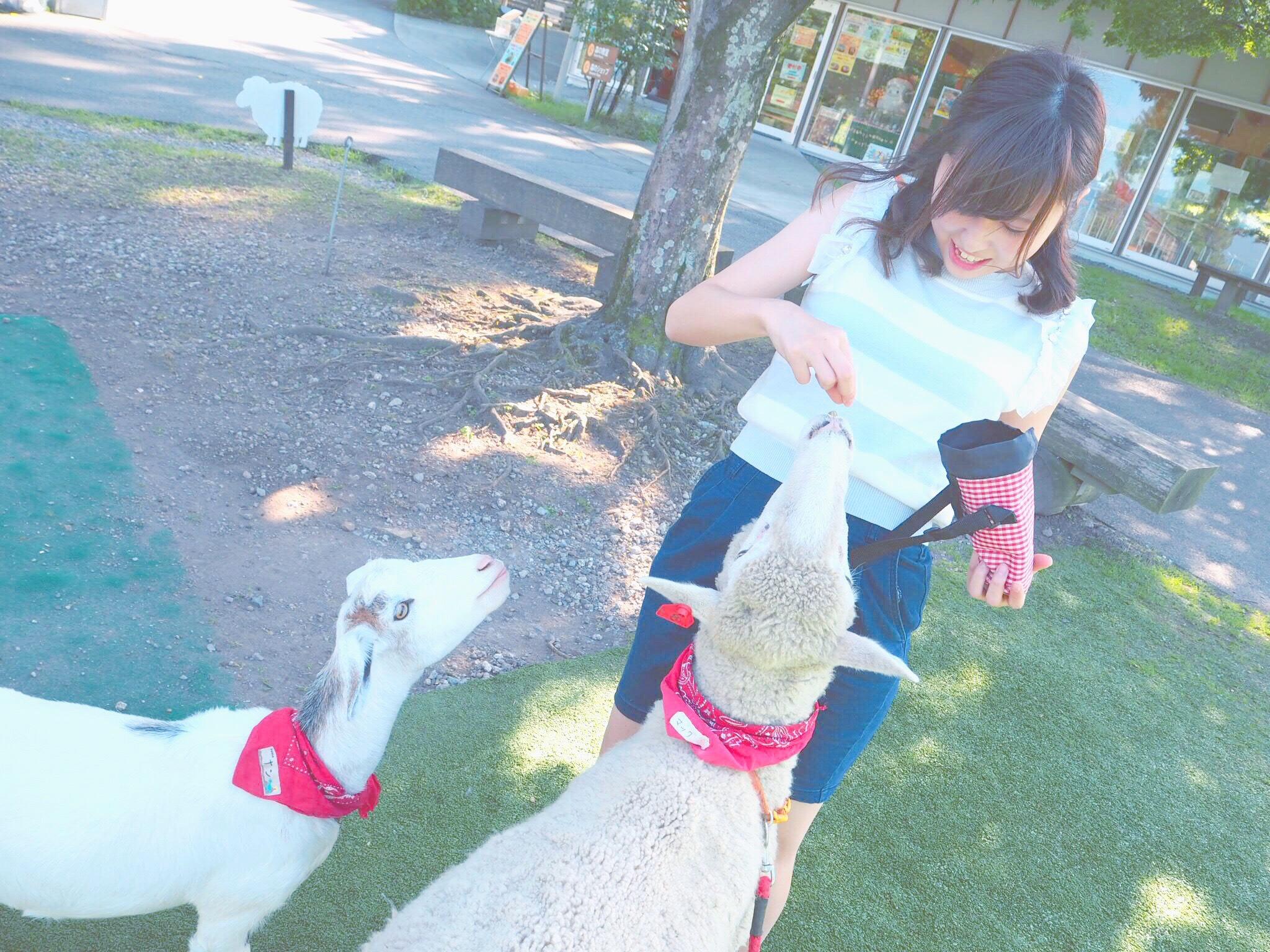 動物好きさん必見!夏は伊香保で羊とお散歩しちゃおう♩_1_3