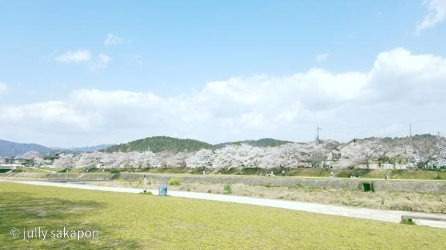 【番外編】古都 京都 鴨川を巡る桜旅 2021.3_1_4