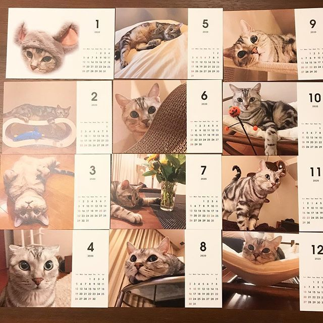 アランのカレンダー、インスタグラムから選んだ画像