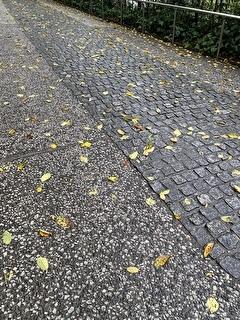 落ち葉も見受けられるようになりました。