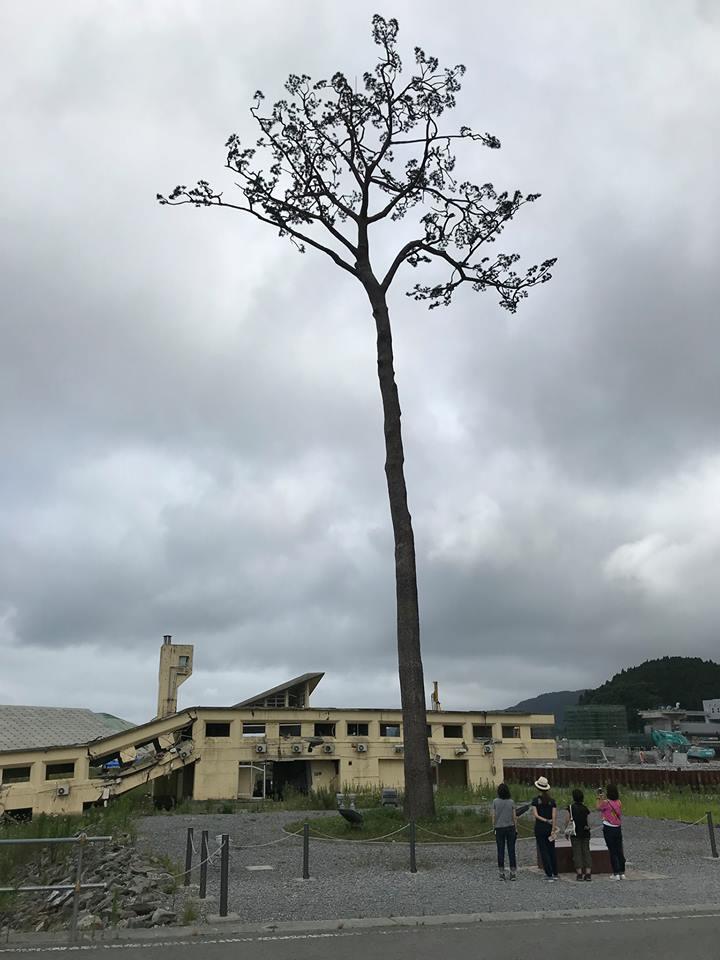 陸前高田市の奇跡の一本松