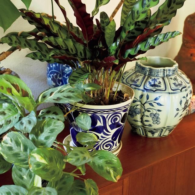 中国のアンティークやベトナムのブルー&ホワイトの染付の壺や花器