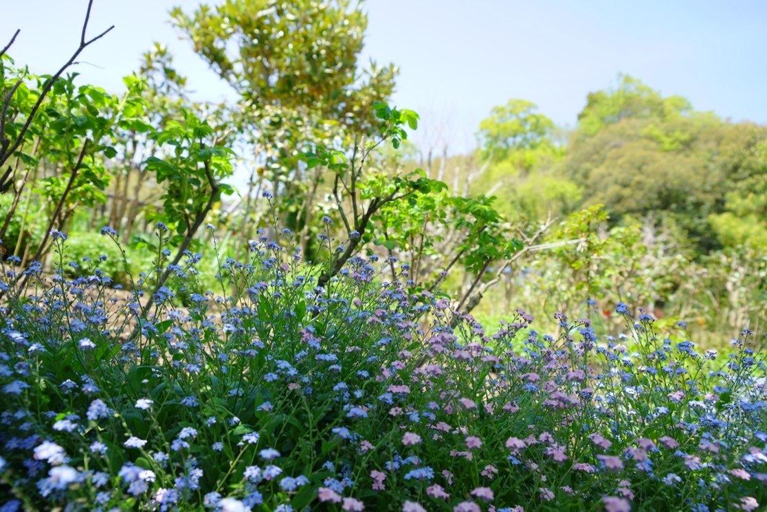 お気に入りトップスにGU白デニムで熊山英国庭園へ ~勿忘草~_1_9