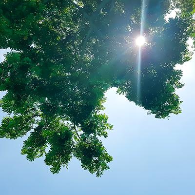 Jtas/Shutterstock.com