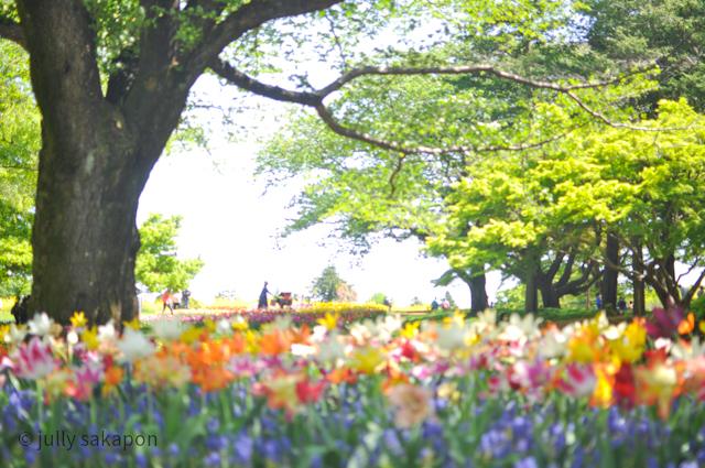【番外編】ほろほろと藤香り ネモフィラの青に包まれて@昭和記念公園_1_2