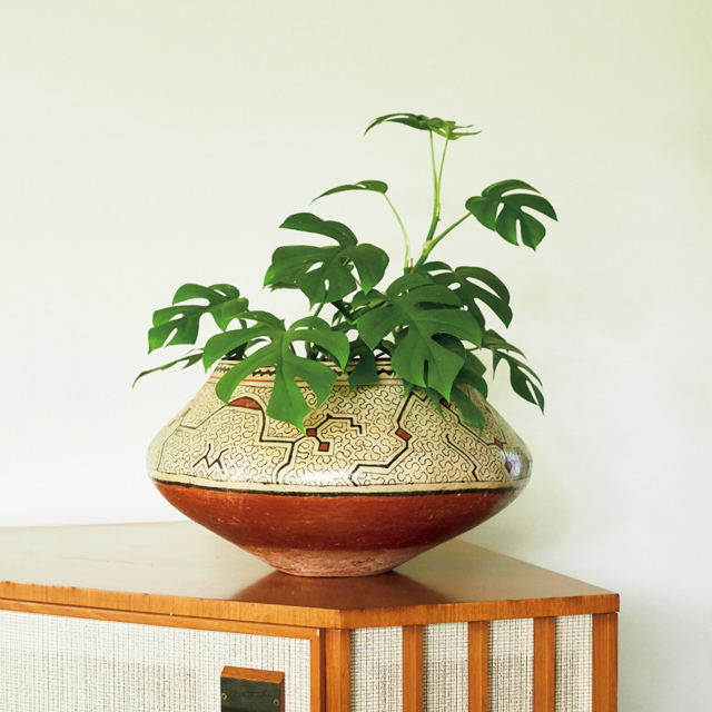 夫である写真家・上田義彦氏がペルーから持ち帰った美しい壺を鉢カバーに