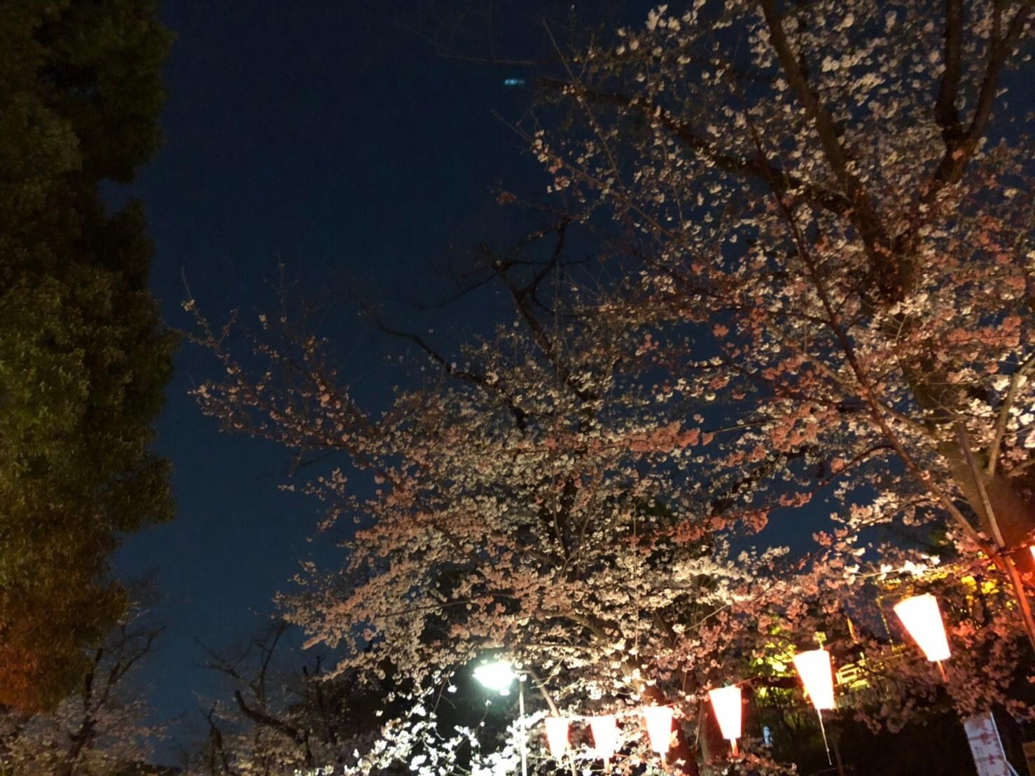 \春うらら上野!屋台と夜桜の注意点/_1_2