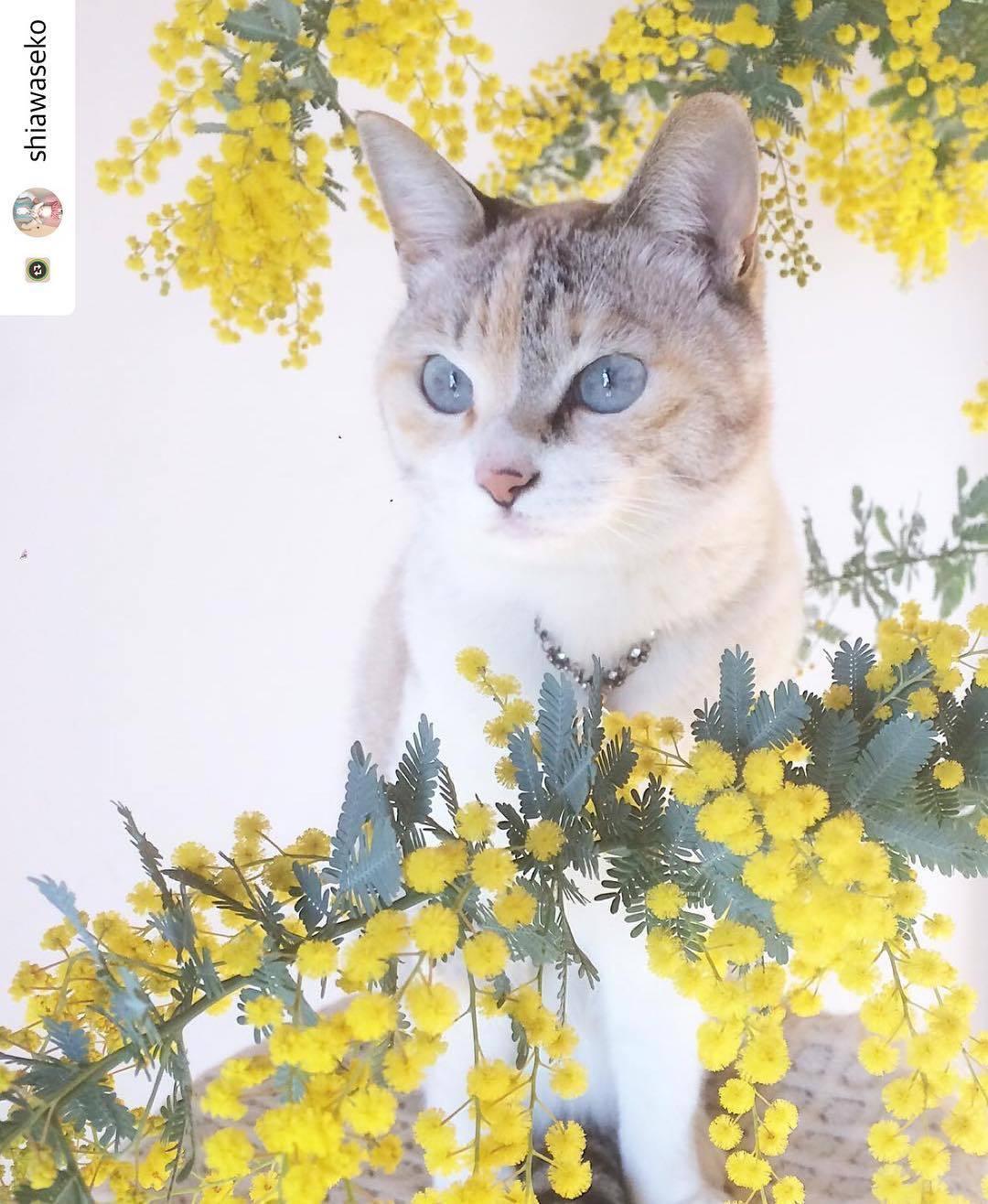 にゃんスタ写真 ふわふわした花がかわいい!