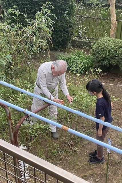 お庭で野菜の収穫