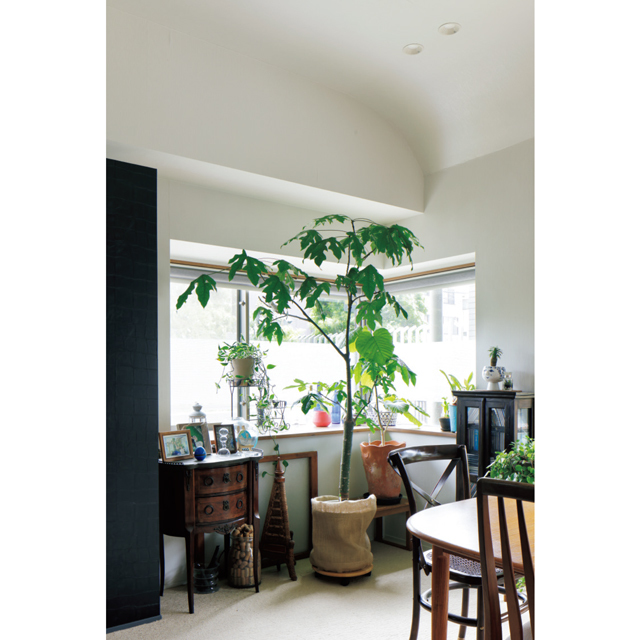 アメリカから持ち帰ったアンティーク家具や植物を置いたコーナー