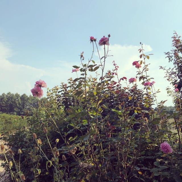 【yuccoのハーブ便り】植物の生命力に触れること。_1_1