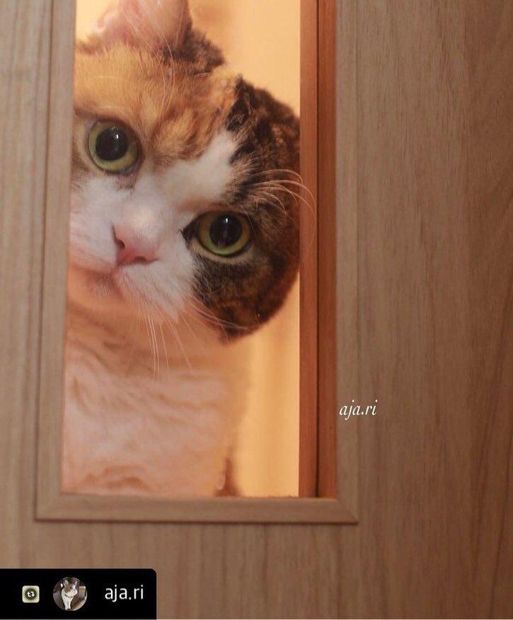 にゃんスタ ドア窓から
