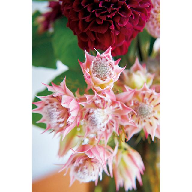 ダリアの色みに合わせながら、花姿や ボリュームの違いで心地よいリズムが