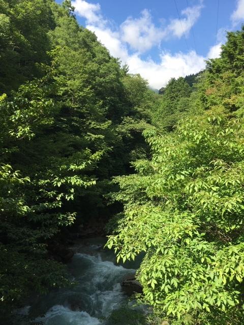 森林浴でリフレッシュ_1_1