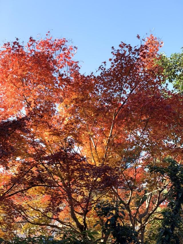 秋の京都を満喫_1_2