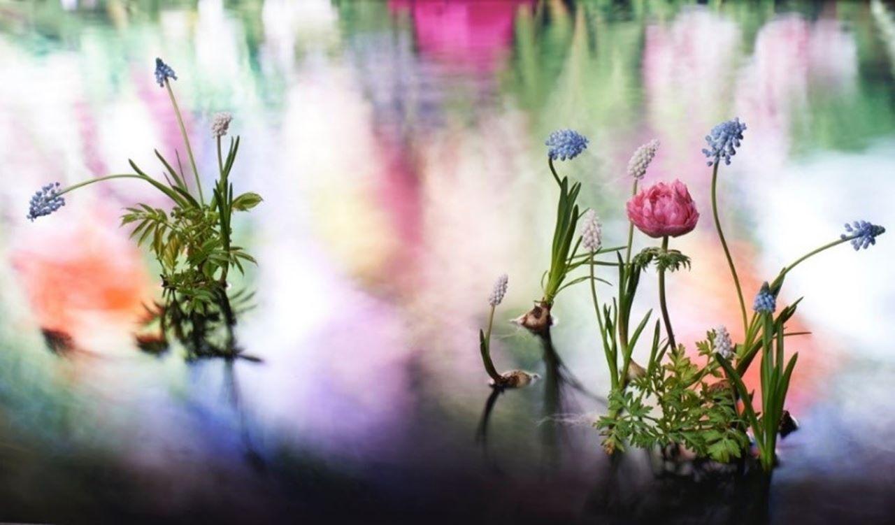 ヴァン クリーフ&アーペル「LIGHT OF FLOWERS ハナの光」メイン