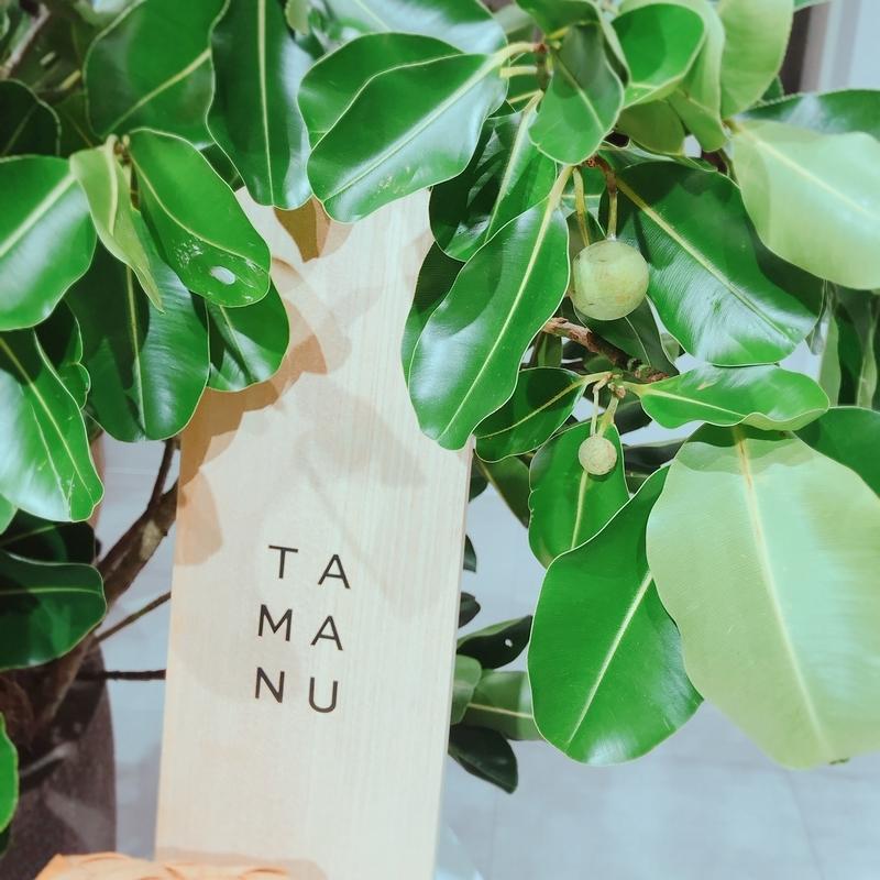 shiroのスキンケアに使われる植物のタマヌ