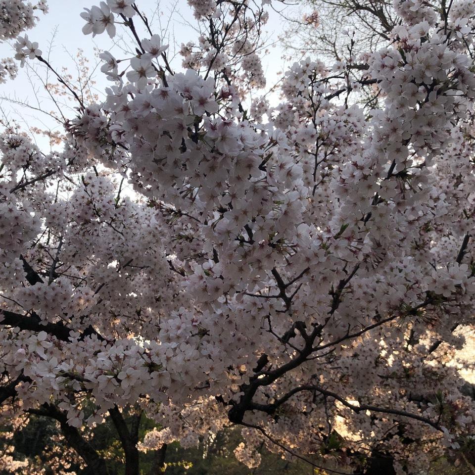 私の春コーデ_1_3