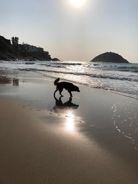 週末はビーチで朝ご飯♪_1_1-3