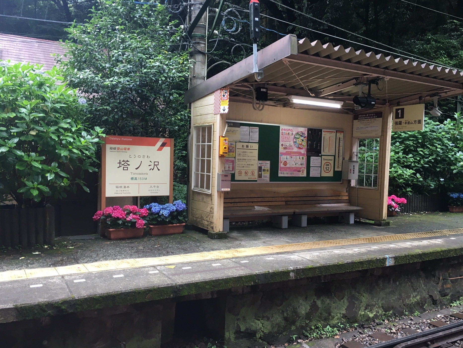 箱根あじさい電車_1_4
